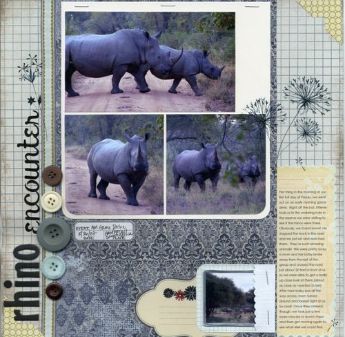 Rhino Encounter
