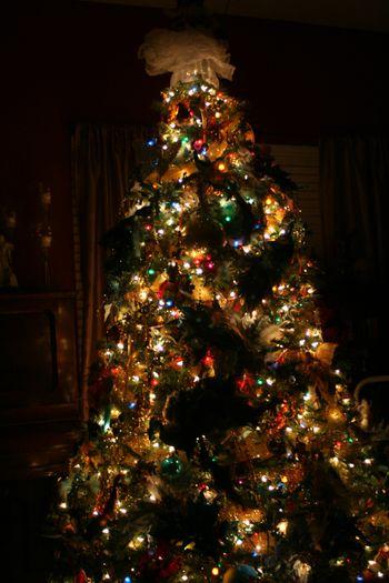 Blog - Tree at Night