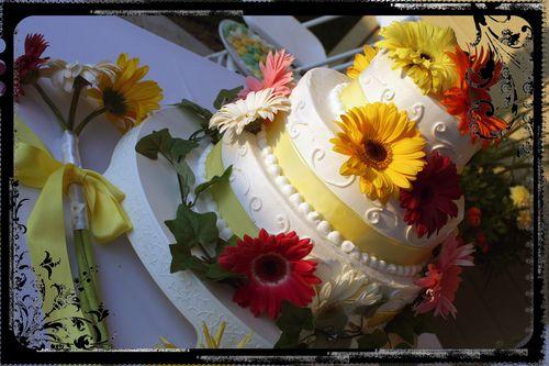 Blog - The Cake