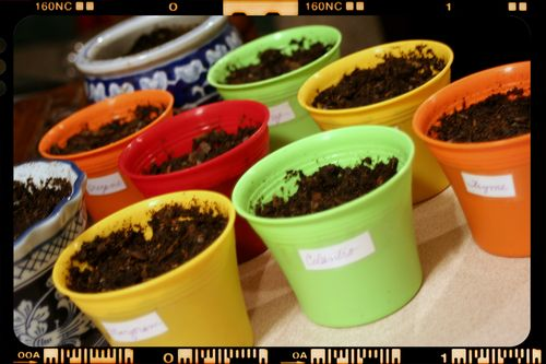 Herb Garden Seed Cups