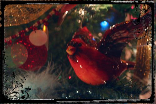 Blog - Christmas Light Photo Experiment 2