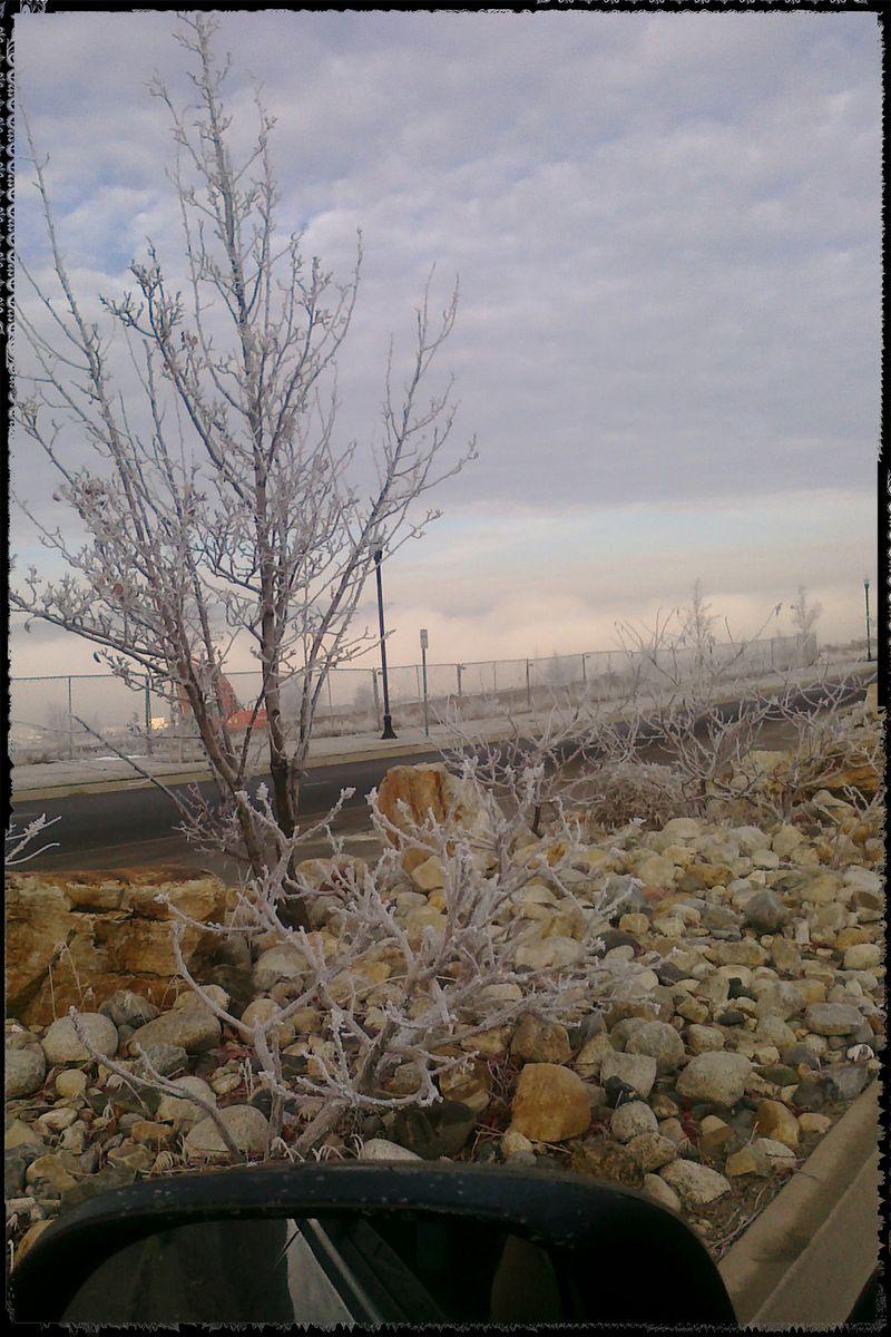 Blog - Frosty Morning