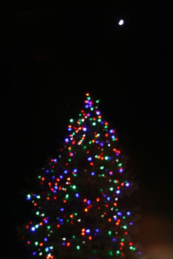 Branford Christmas Tree and Moon
