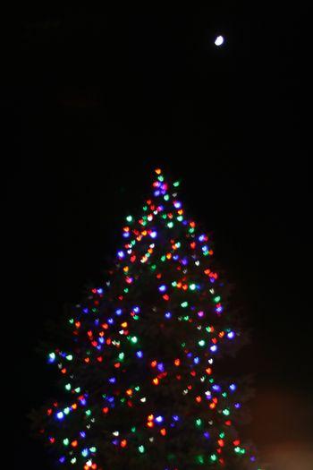 Branford Christmas Tree and Moon