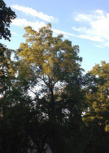 Beautiful Early Fall Light